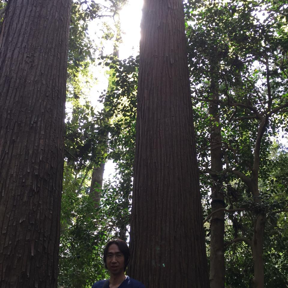 神様がいらっしゃる木
